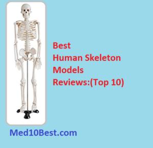 Best Human Skeleton Models