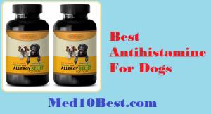 Best Antihistamine For Dogs