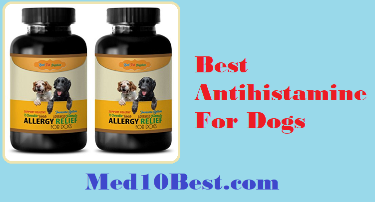Best Antihistamine For Dogs 2019 Reviews & Buyer's Guide